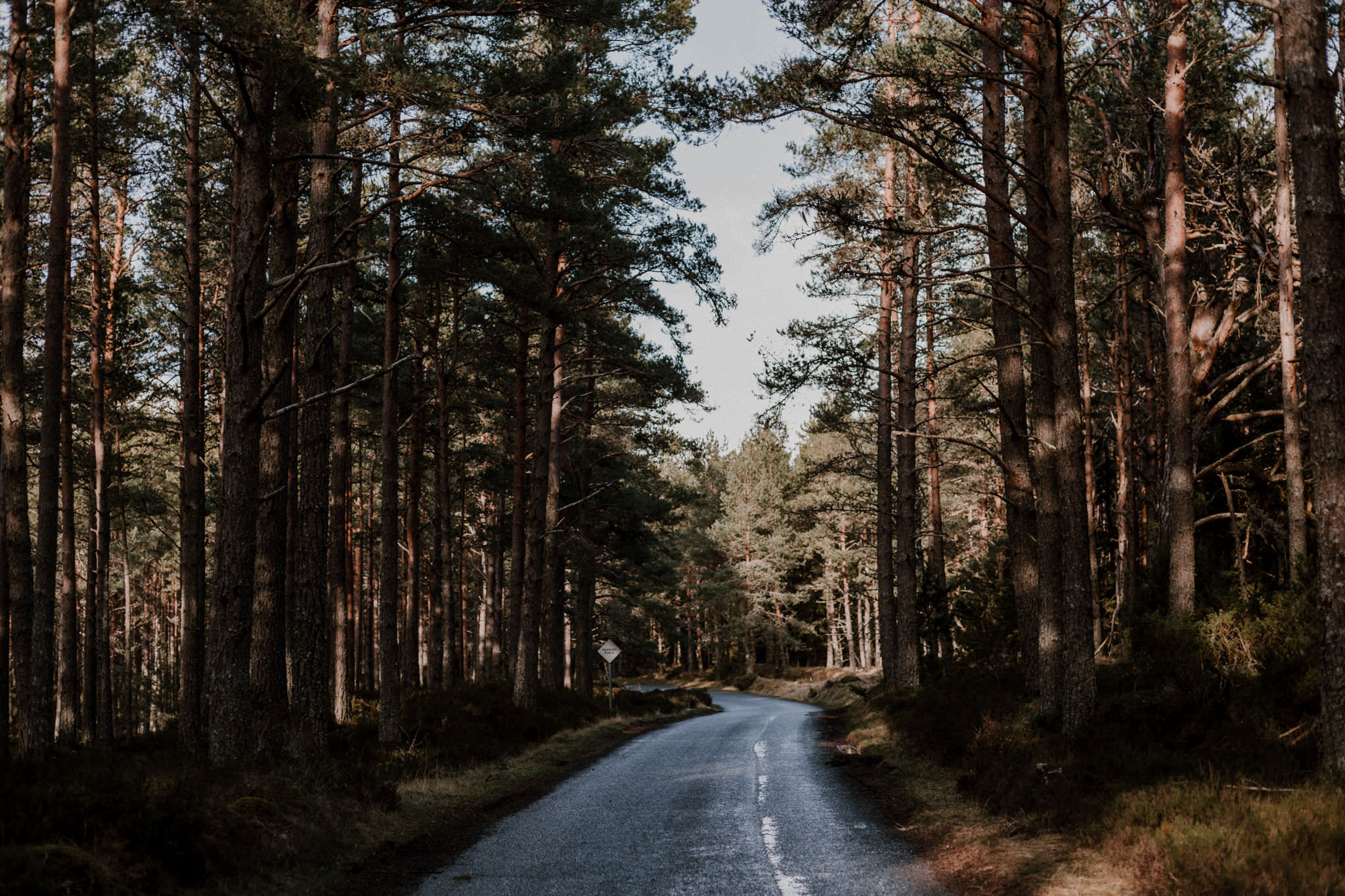 Road running through pine forest in Cairngorms National Park