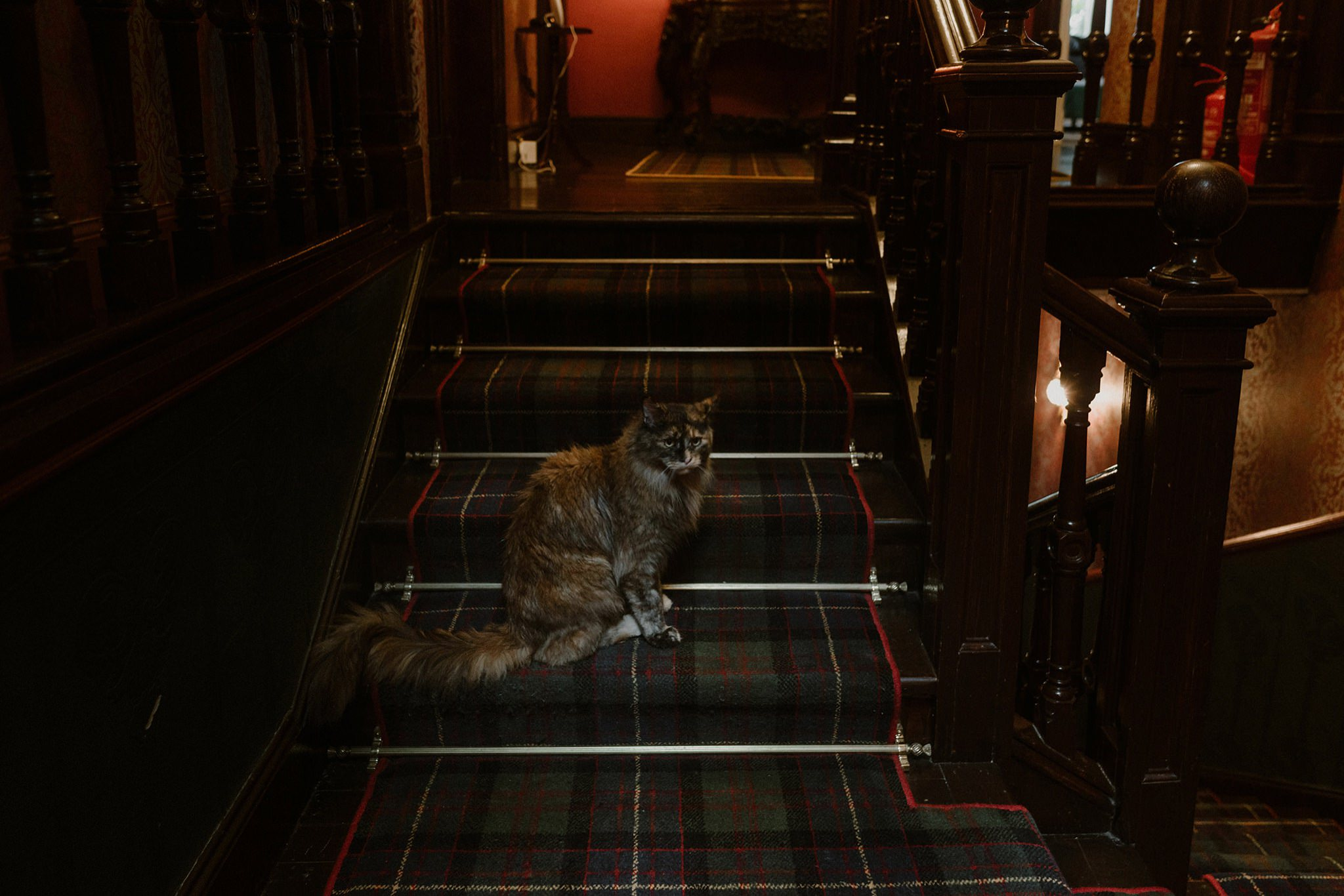 Highland cat Ardrhu house Onich Scotland