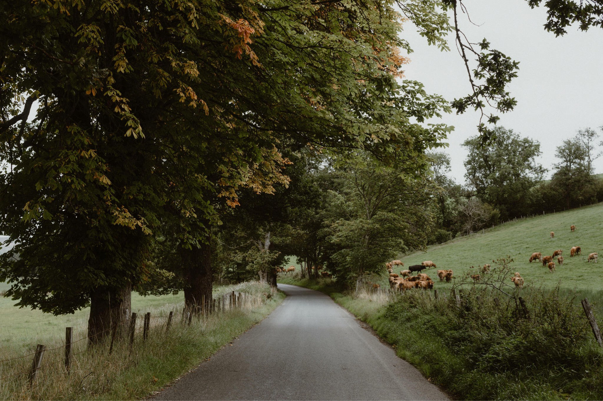 A road in the Tay valley