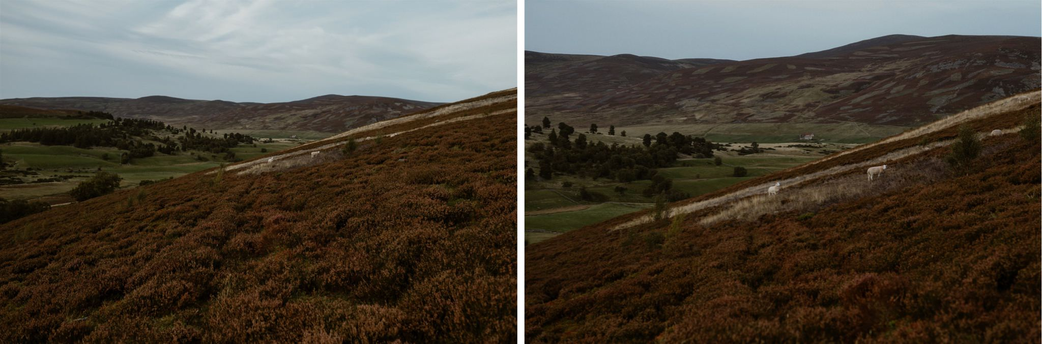 Scottish Highland landscape in the Cairngorms
