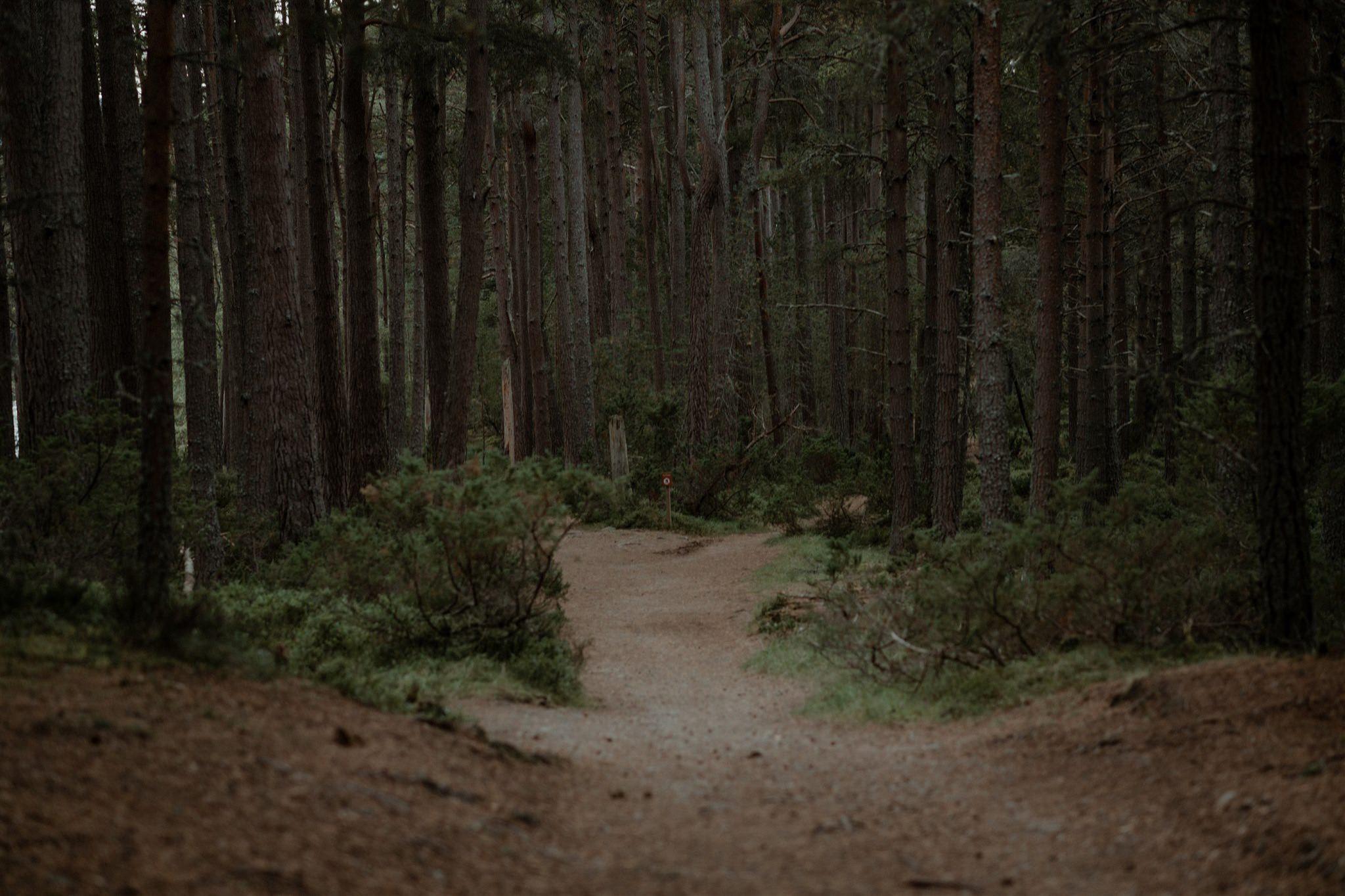 Caledonian forest at Loch Garten