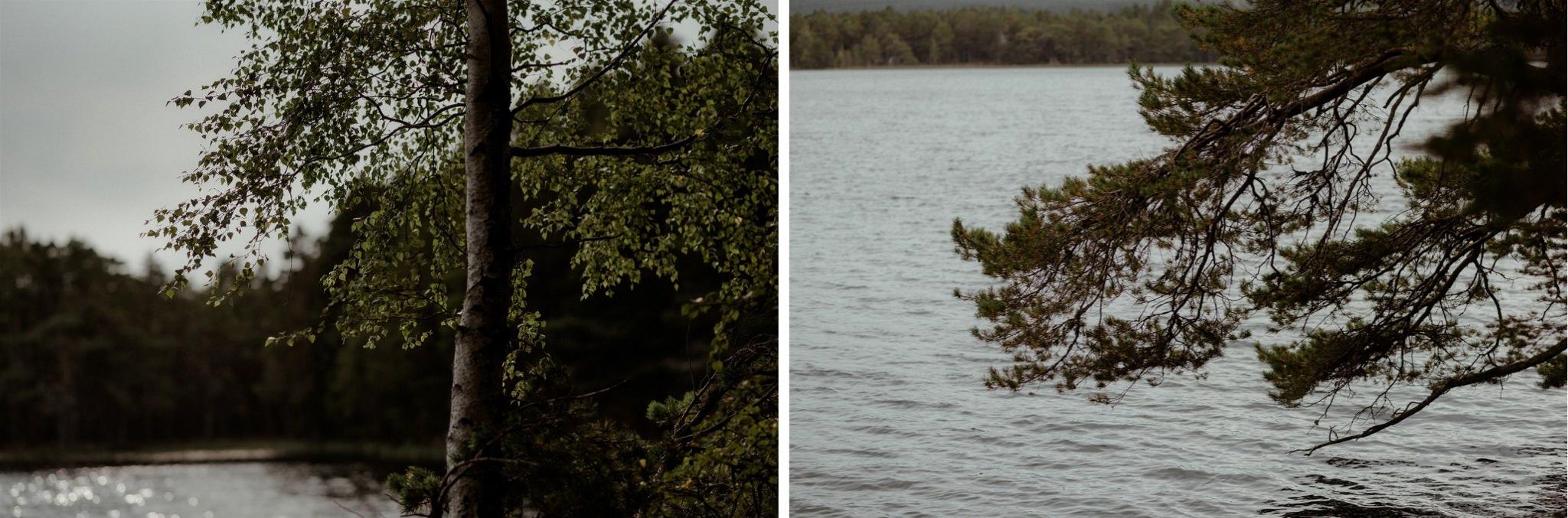 Loch Garten trees
