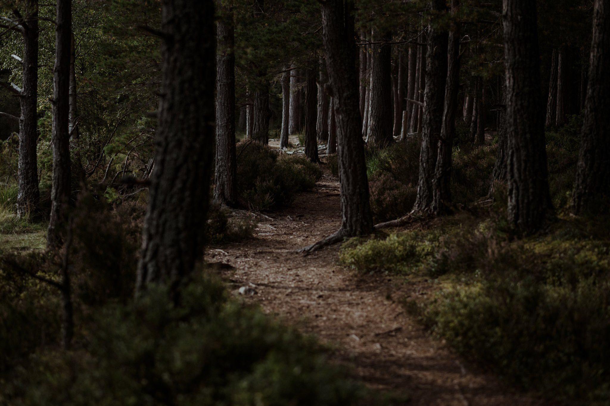 Path through the woods near Loch Garten in the Cairngorms Scotland