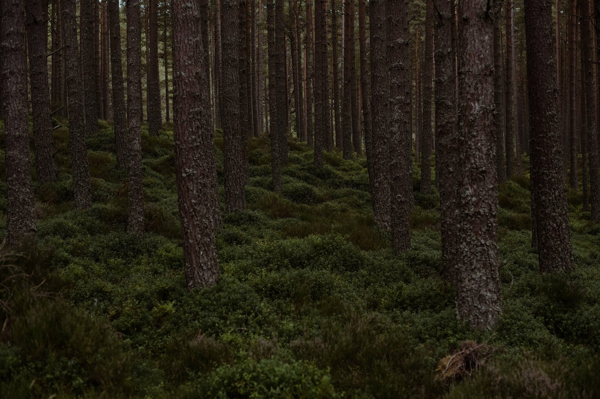 Trees and forest at Glenmore Lodge Cairngorms
