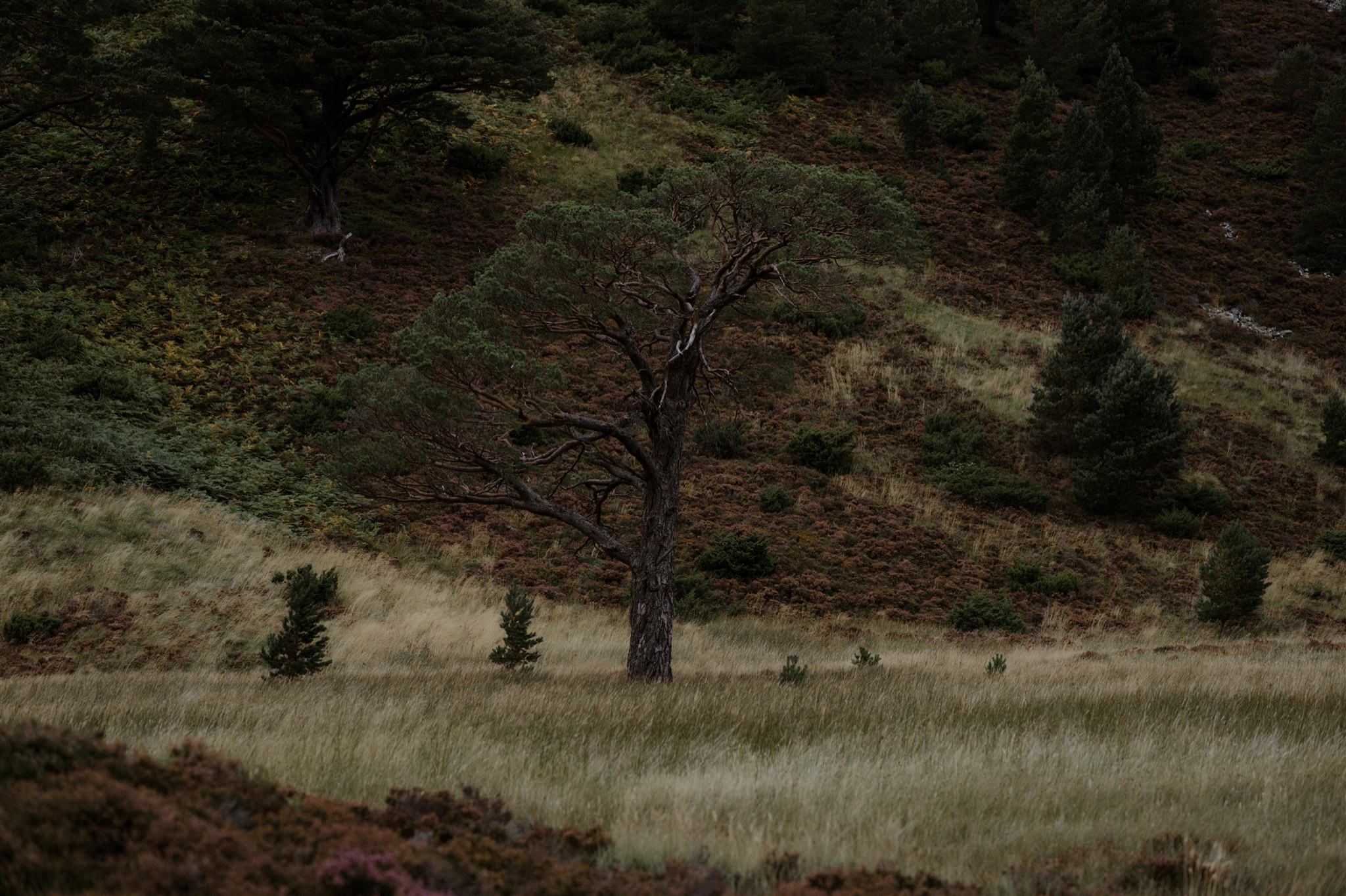 Trees and grassland in Glen More Cairngorms National Park