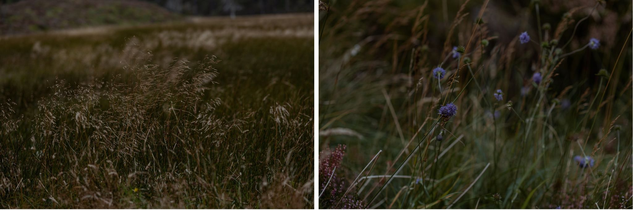Grass and flowers in Glen More Cairngorms National Park