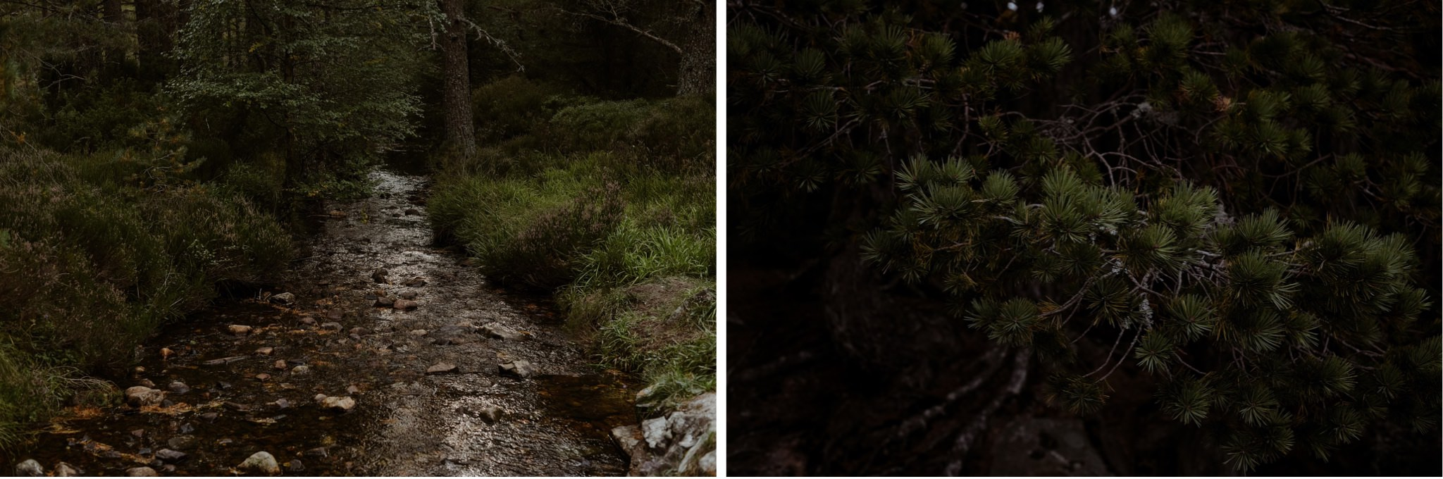 Forest river in the Cairngorms national Park