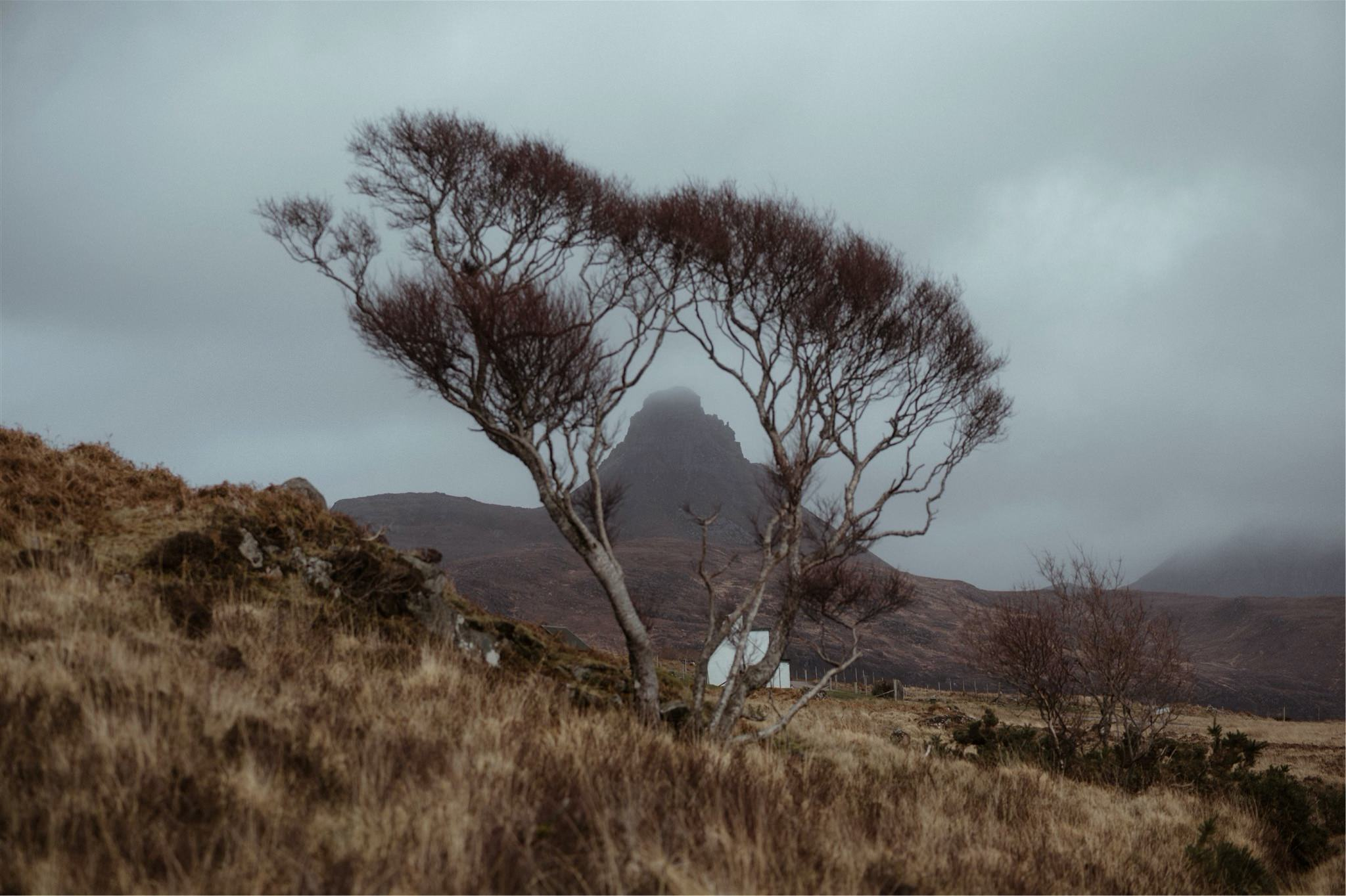 Landscape shot of a tree, cottage and mountain in Assynt, Scotland